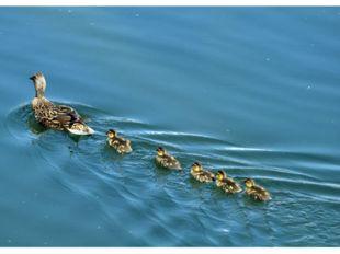 Маленькие шлюпки По реке — взад и вперед. Впереди лодочек Большой корабль плы