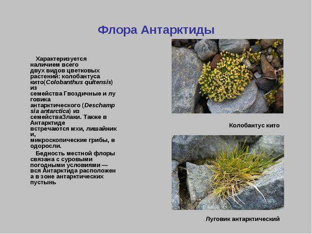 Флора Антарктиды Характеризуется наличием всего двухвидовцветковых растений...