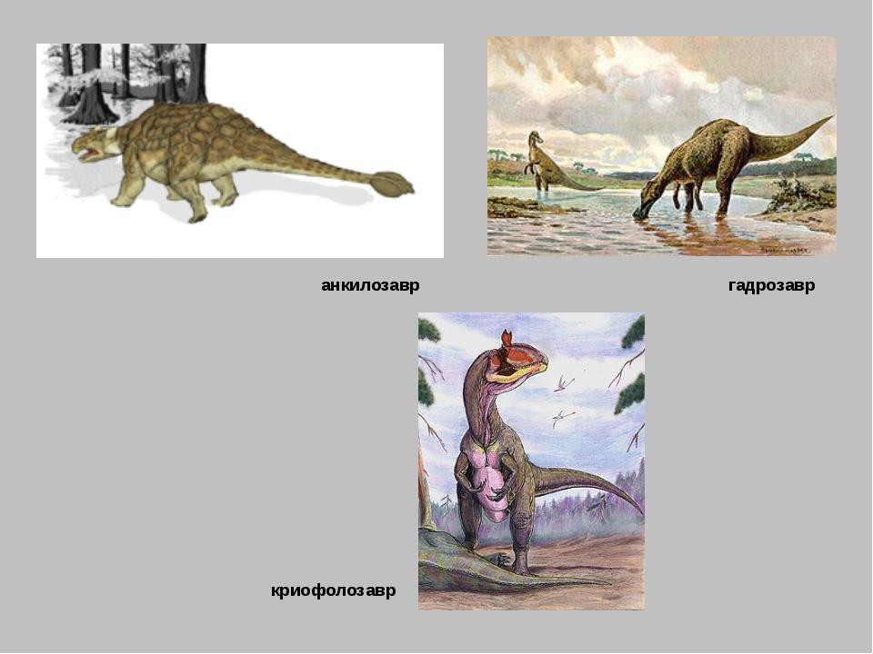 анкилозавр гадрозавр криофолозавр