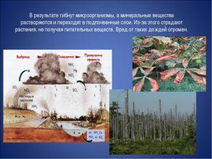 В результате гибнут микроорганизмы, а минеральные вещества растворяются и пер