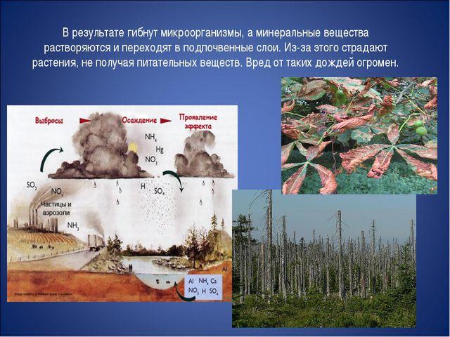 В результате гибнут микроорганизмы, а минеральные вещества растворяются и пер...