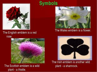 Symbols The English emblem is a red rose. The Wаlеs emblem is a flower. The S