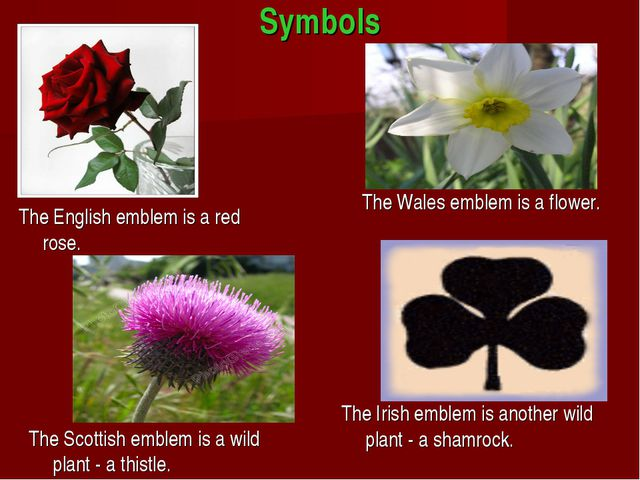 Symbols The English emblem is a red rose. The Wаlеs emblem is a flower. The S...