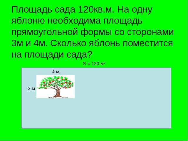 Площадь сада 120кв.м. На одну яблоню необходима площадь прямоугольной формы с...