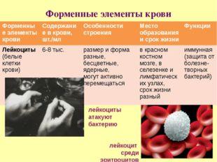 Форменные элементы крови лейкоцит среди эритроцитов лейкоциты атакуют бактери