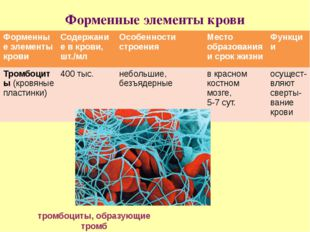 Форменные элементы крови тромбоциты, образующие тромб Форменныеэлементы крови