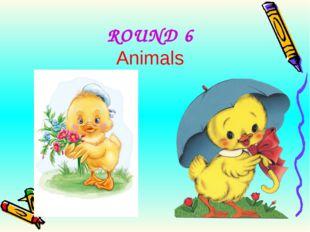 ROUND 6 Animals