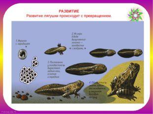 РАЗВИТИЕ Развитие лягушки происходит с превращением.  FokinaLida.75