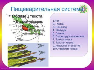 Пищеварительная система 1.Рот 2. Глотка 3. Пищевод 4. Желудок 5. Печень 6. По