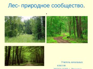 Лес- природное сообщество. . Учитель начальных классов МОБУ СОШ с. Ишемгул Ша