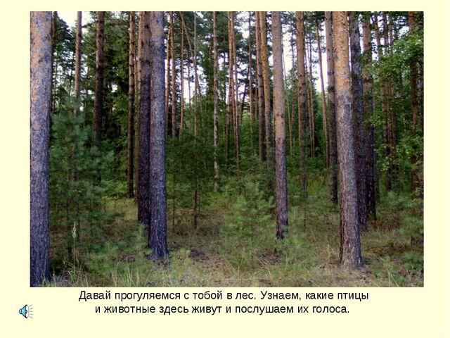 Давай прогуляемся с тобой в лес. Узнаем, какие птицы и животные здесь живут и...
