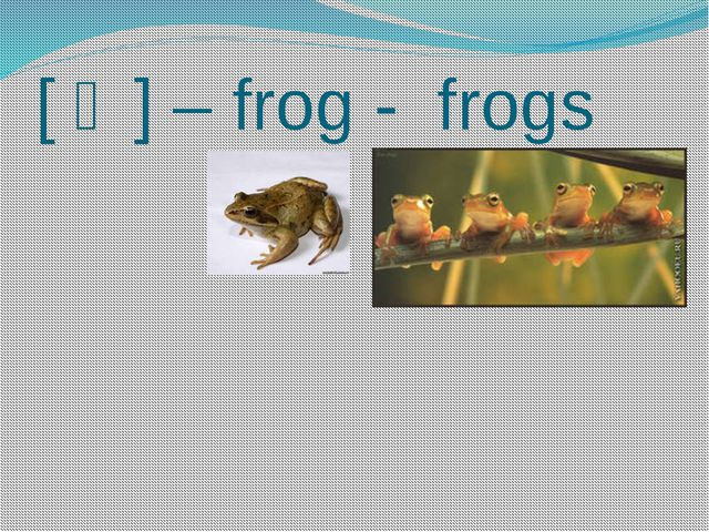 [ ↄ ] – frog - frogs