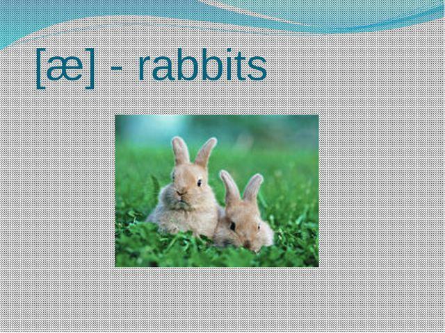 [æ] - rabbits