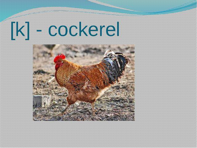 [k] - cockerel