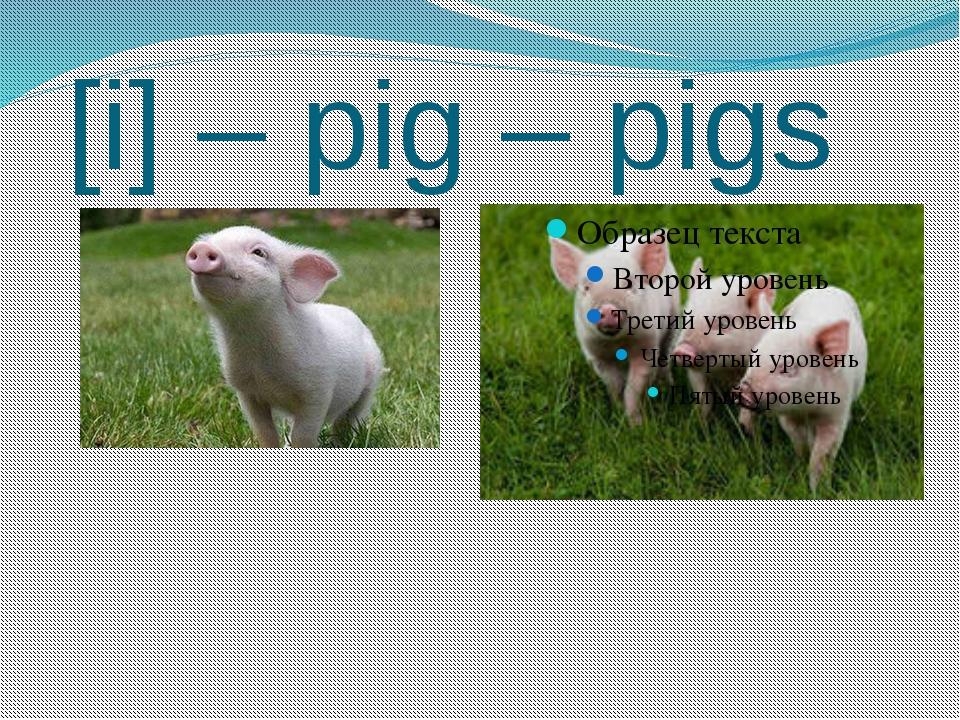 [i] – pig – pigs