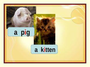a pig a kitten