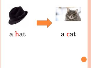 a hat a cat