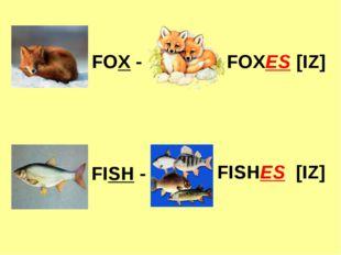 FOX - FOXES [IZ] FISH - FISHES [IZ]