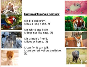 Guess riddles about animals: It is big and grey. It has a long nose.(?)   It