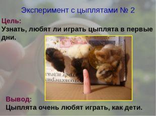 Эксперимент с цыплятами № 2 Цель: Узнать, любят ли играть цыплята в первые дн