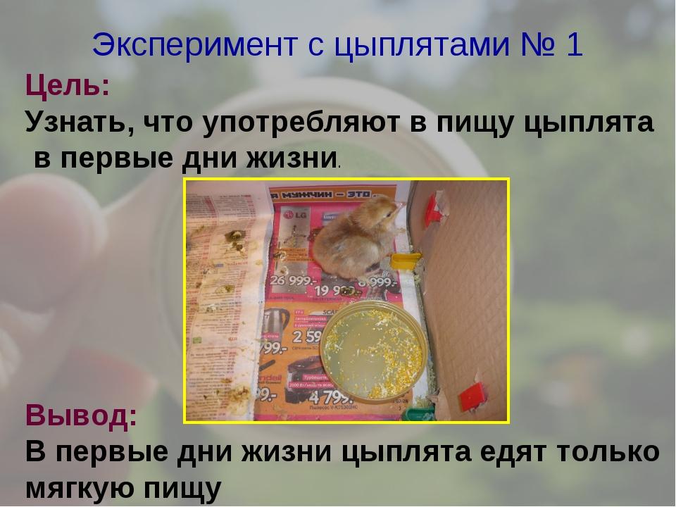 Эксперимент с цыплятами № 1 Цель: Узнать, что употребляют в пищу цыплята в пе...