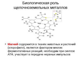 Биологическая роль щелочноземельных металлов Магний содержится в тканях живот