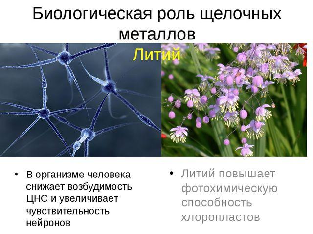 Биологическая роль щелочных металлов Литий В организме человека снижает возбу...