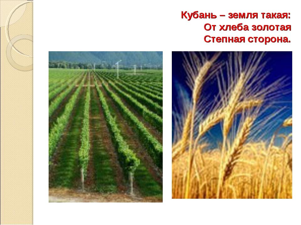 Кубань – земля такая: От хлеба золотая Степная сторона.