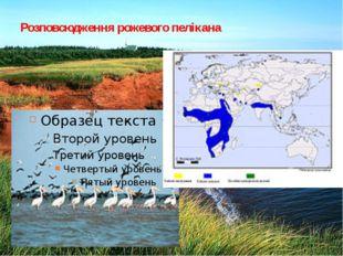Розповсюдження рожевого пелікана