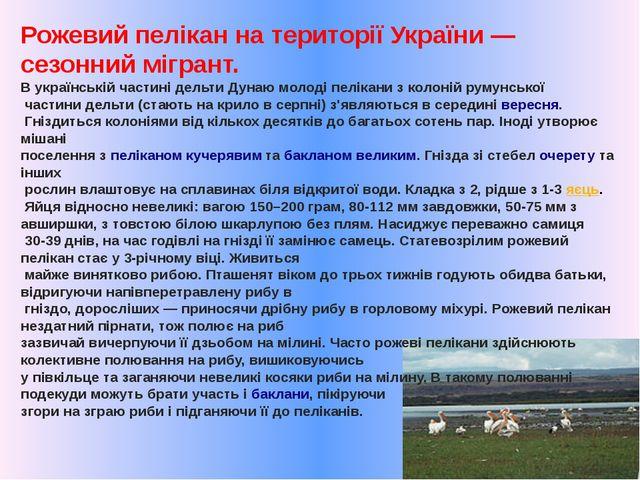 Рожевий пелікан на території України— сезонний мігрант. В українській частин...