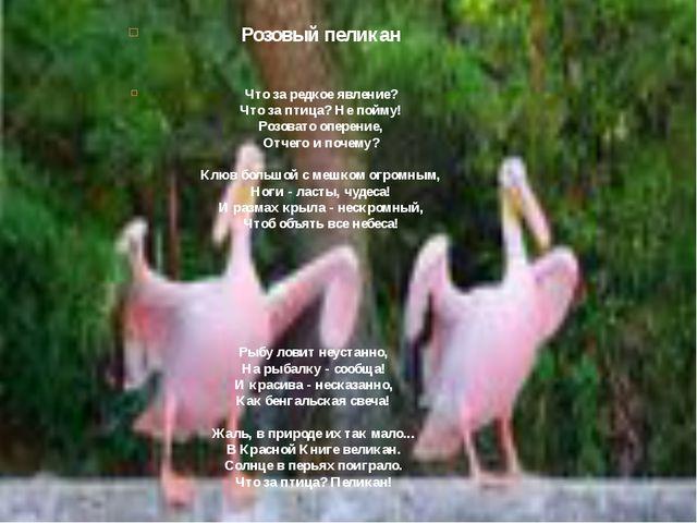 Розовый пеликан Что за редкое явление? Что за птица? Не пойму! Розовато опере...