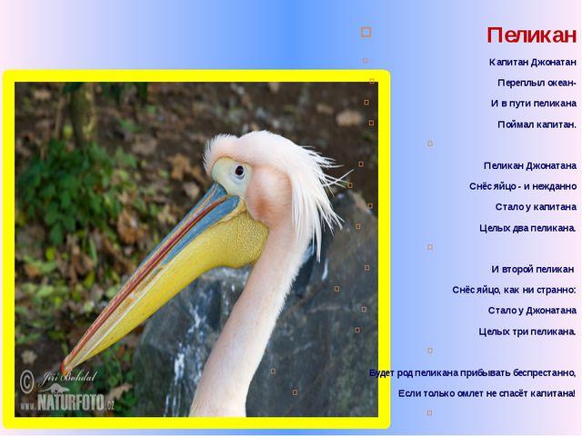 Пеликан Капитан Джонатан Переплыл океан- И в пути пеликана Поймал капитан. ...