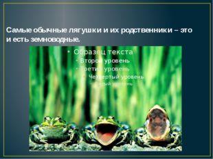 Самые обычные лягушки и их родственники – это и есть земноводные.