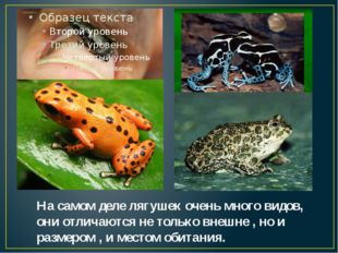 На самом деле лягушек очень много видов, они отличаются не только внешне , но