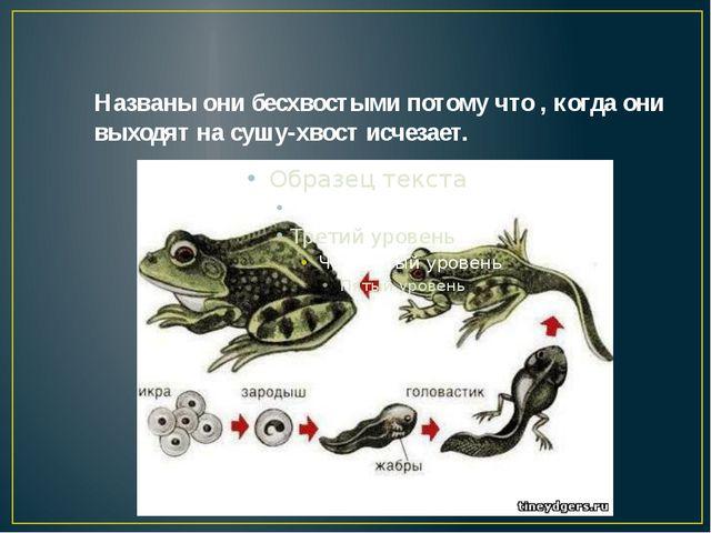 Названы они бесхвостыми потому что , когда они выходят на сушу-хвост исчезает.