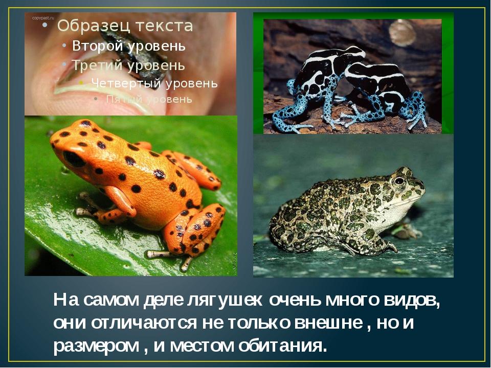 На самом деле лягушек очень много видов, они отличаются не только внешне , но...