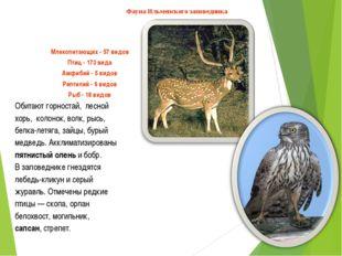Млекопитающих - 57 видов Птиц - 173 вида Амфибий - 5 видов Рептилий - 6 видов