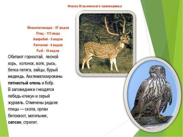Млекопитающих - 57 видов Птиц - 173 вида Амфибий - 5 видов Рептилий - 6 видов...
