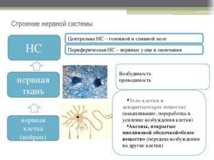 Строение нервной системы НС нервная ткань нервная клетка (нейрон) Тело клетки