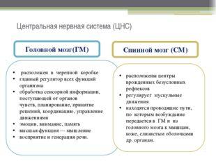 Центральная нервная система (ЦНС) Головной мозг(ГМ) Спинной мозг (СМ) располо