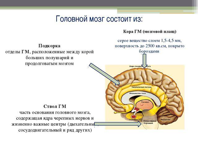 Головной мозг состоит из: Кора ГМ (мозговой плащ) серое вещество слоем 1,5-4,...