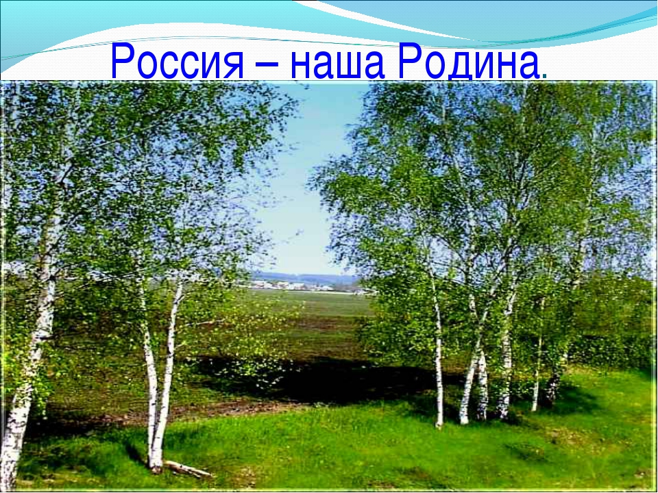 Символы россии в картинках береза