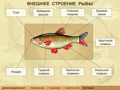 http://tana.ucoz.ru/_ld/19/28545.jpg