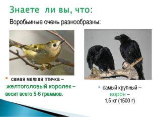 самый крупный – ворон – 1,5 кг (1500 г) Воробьиные очень разнообразны: самая