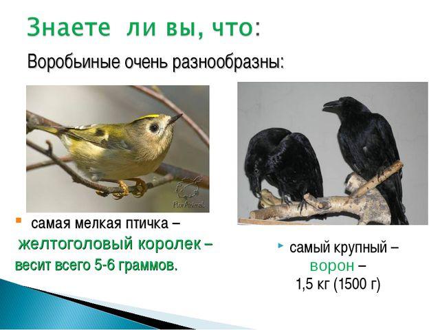 самый крупный – ворон – 1,5 кг (1500 г) Воробьиные очень разнообразны: самая...