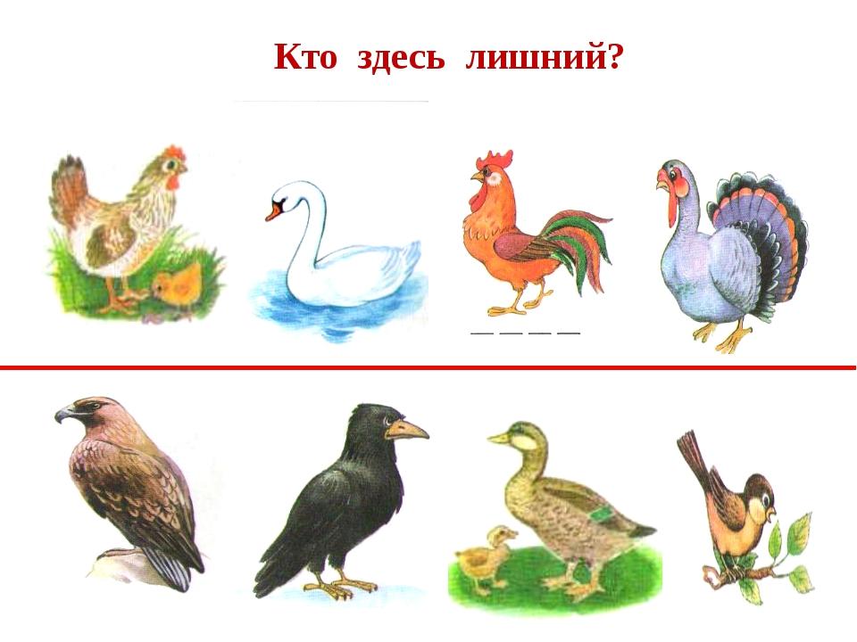 картинки для игры домашние птицы необычная для