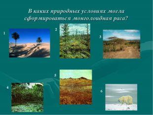 В каких природных условиях могла сформироваться монголоидная раса? 1 2 3 4 5 6