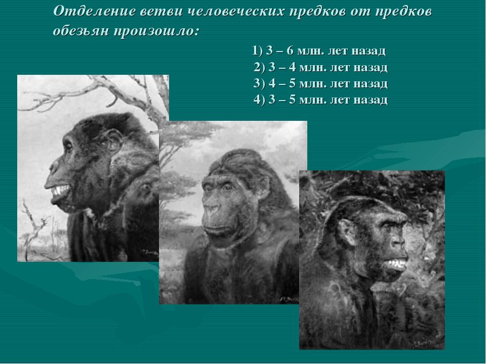 Отделение ветви человеческих предков от предков обезьян произошло: 1) 3 – 6...