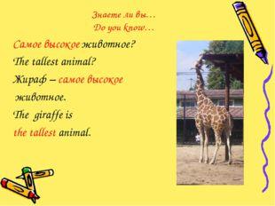 Знаете ли вы… Do you know… Самое высокое животное? The tallest animal? Жираф