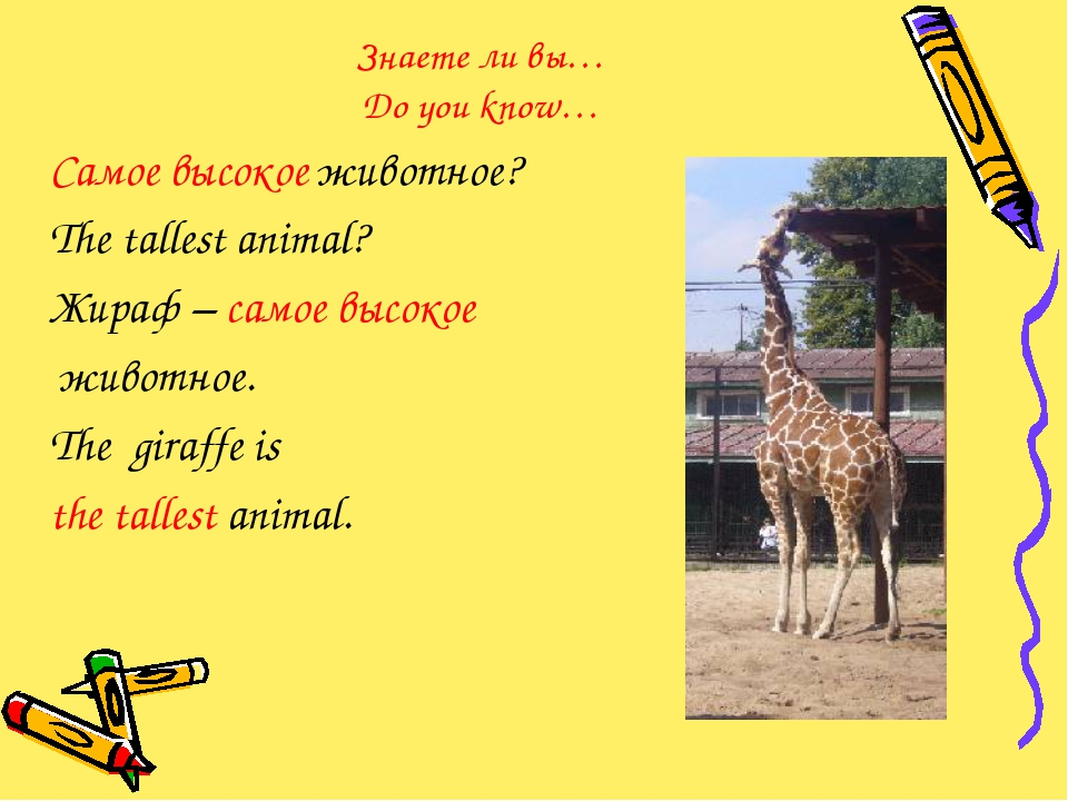 Знаете ли вы… Do you know… Самое высокое животное? The tallest animal? Жираф...